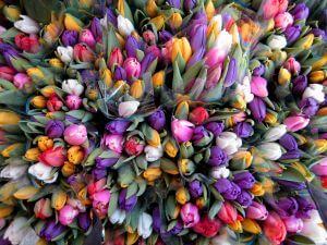 Tulpen gibt es in unzähligen Farben