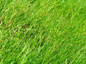 Manchmal muss Rasen ausgebessert werden