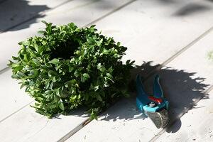 Mit der Rosenschere lassen sich auch andere Pflanzen schneiden