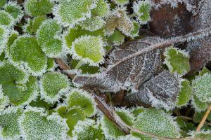 Der Frost kann einigen Pflanzen schaden