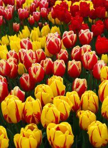 Farbbeete sind ein toller Blickfang im Garten
