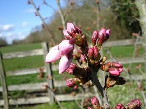 Im März erwacht der Garten langsam zu neuem Leben