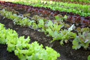 Beim Anlegen von Gemüsebeeten gilt es einiges zu beachten