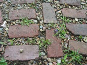 Unkraut sprießt nicht nur im Garten, sondern auch auf Wegen