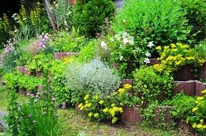 Einen Steingarten anlegen - Garten-Ratgeber.net | Garten Tipps für ...