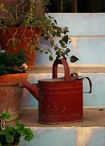 Pflanzen richtig gießen will auch gelernt sein