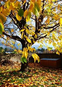 Im Herbst wird der Garten vor allem auf den Winter vorbereitet