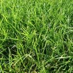 Im Frühling muss die Grundlage für einen schönen Rasen geschaffen werden