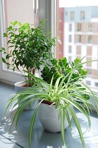 zimmerpflanzen online kaufen darauf sollten sie achten garten garten tipps. Black Bedroom Furniture Sets. Home Design Ideas