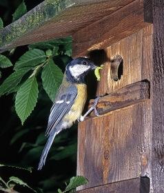 Viele Vögel können nur noch dank Nistkästen ihre Brut aufziehen © Omika - Fotolia.com
