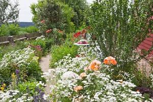 einen naturgarten anlegen und gestalten | garten-ratgeber, Gartenarbeit ideen