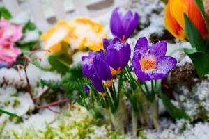 Nach dem Winter tut dem Boden etwas Kalk gut © Stefan Körber - Fotolia.com