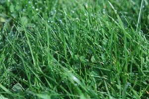 Rasenflächen müssen das ganze Jahr über gepflegt werden