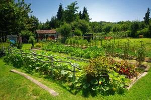 Die Anordnung im Gemüsegarten sollte gut durchdacht sein © David Espin - Fotolia.com