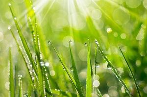 Grünflächen leiden oft an Eisenmangel © Leonid Ikan - Fotolia.com