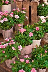 Topfpflanzen kann man auch gut auf einer Pflanzentreppe arrangieren © mahey - Fotolia.com
