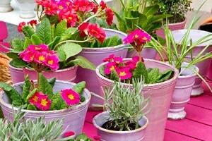 Den Topfgarten kann man nach Belieben bepflanzen © Jürgen Fälchle - Fotolia.com