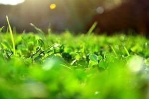 Bei der Auswahl des Rasens kommt es auf die Nutzung der Grünfläche an