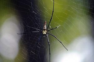 Viele Menschen ängstigen sich vor Spinnen