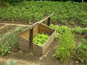 Ein Frühbeet Aus Holz Im Garten Aufstellen | Garten-ratgeber.net ... Garten Fruhbeet Vorteile Tipps