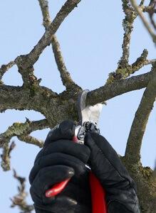Beim Winterschnitt kann man prima Steckhölzer gewinnen © Thomas Oswald - Fotolia.com