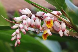 exotische pflanzen für schattige plätze | garten-ratgeber, Best garten ideen