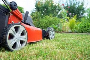 April Zeit Für Den Ersten Rasenschnitt Garten Ratgebernet