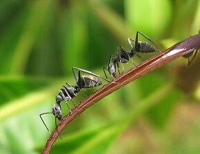 Ameisen Im Hochbeet Bekämpfen Garten Ratgebernet Garten Tipps