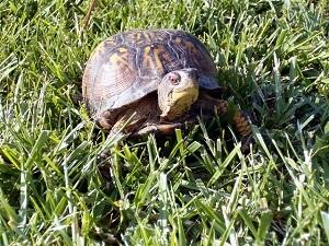 Schildkrötenhaltung Im Frühbeet | Garten-ratgeber.net | Garten ... Garten Fruhbeet Vorteile Tipps