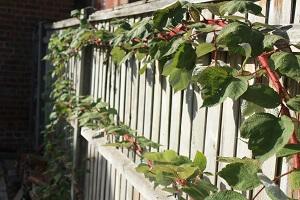 Den Passenden Zaun Für Den Garten Finden | Garten-ratgeber.net ... Passende Zaun Fur Den Garten