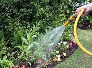 Im Sommer kommt man um eine zusätzliche Bewässerung kaum herum