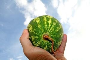 Wassermelonen bleiben in unseren Breitengraden viel kleiner