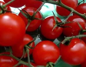 Gemüse Archives - Garten-ratgeber.net | Garten Tipps Für ... Gemuse Im Spatsommer Sorten Garten Tipps