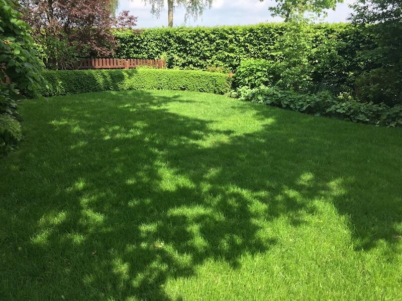 wunderschöner Rasen