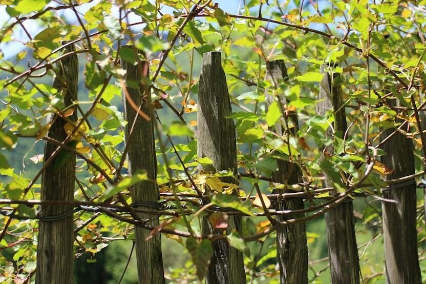 Holz im Außenbereich: Die richtige Imprägnierung
