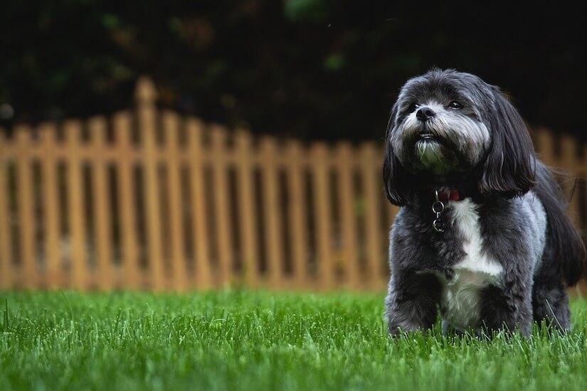 Ein Hundezaun für den Garten
