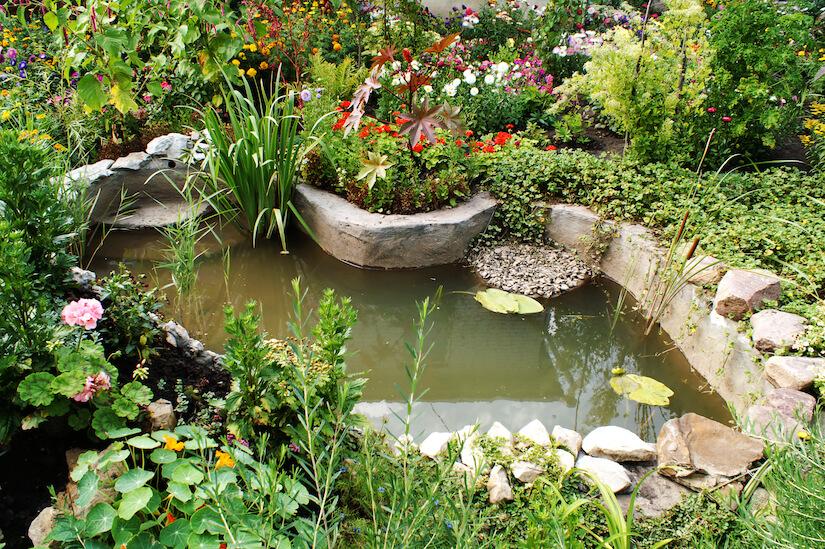 Ein Gartenteich muss regelmäßig gereinigt werden