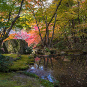 Waldgarten im Herbst